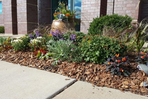 Fall Flowers outside Capitol Bank Madison